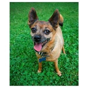dog pic for blog