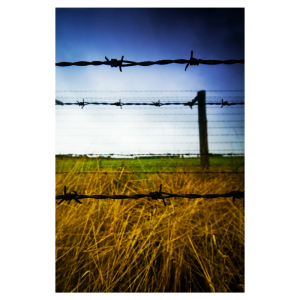 chuckles barb wire
