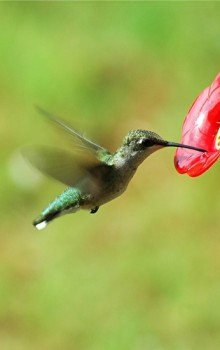 What Hummingbirds Taught Me